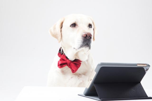 タブレットでアニメを見る犬